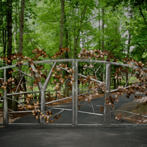 Metal Beech Tree Gate